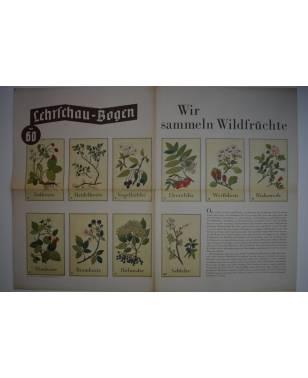 Lehrschau-Bogen Nr. 60/60a Wir sammeln Wildfrüchte-20